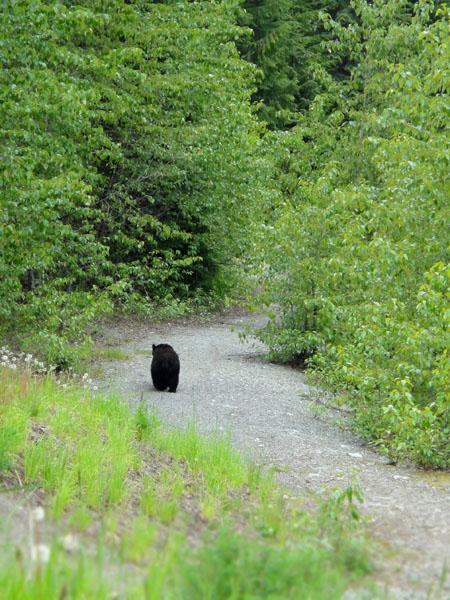 b110619_bear